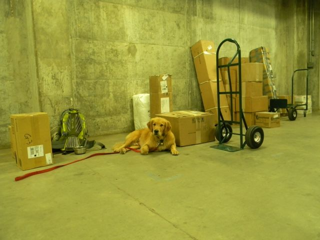 Barley guarding parcels in the mail room