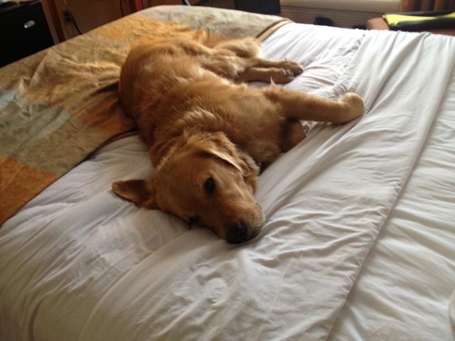 Barley generally takes the bed closest to the AC
