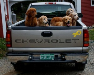 Chevy_of_Dogs