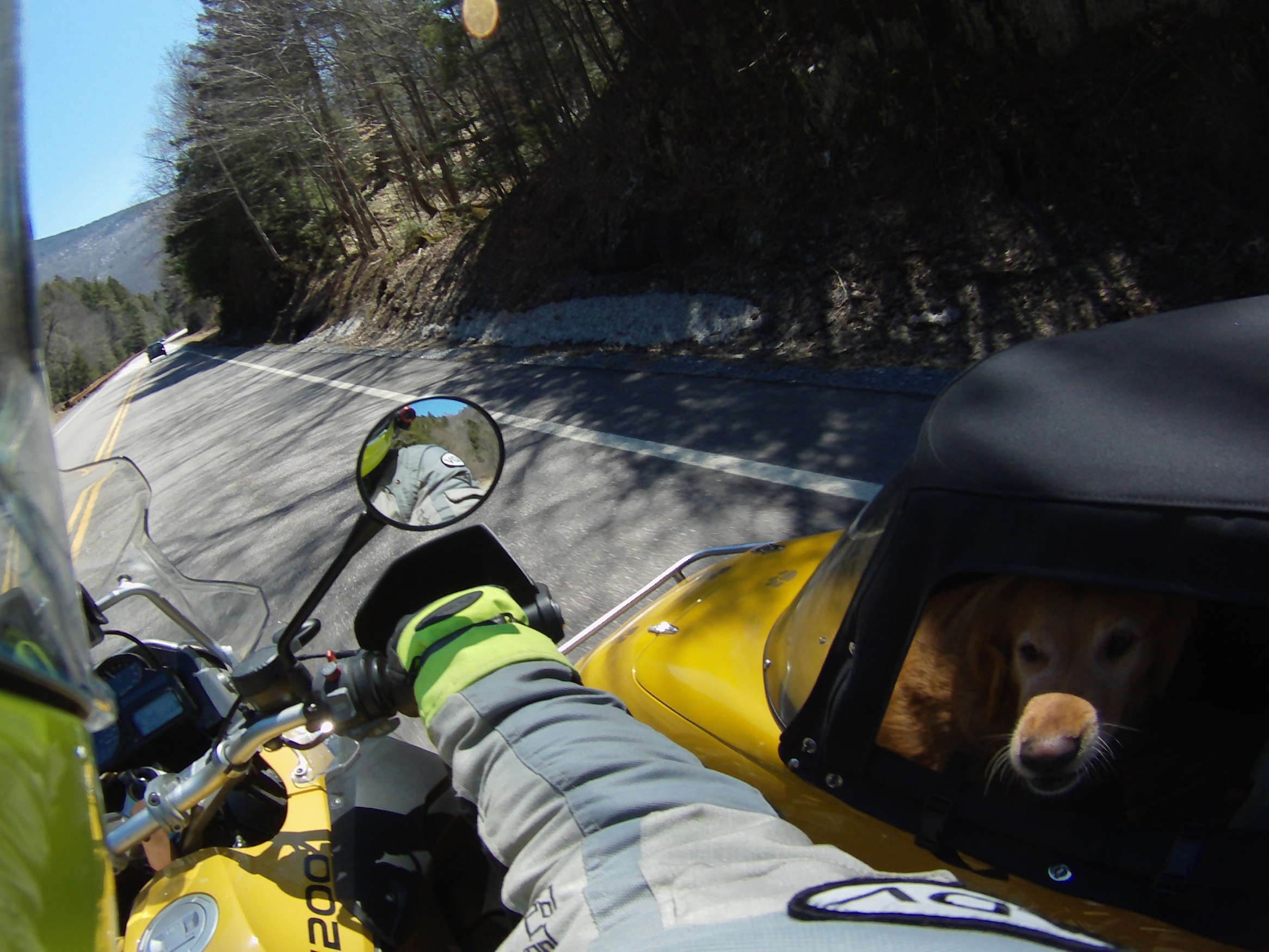 Barley hunkers down as we ride the Kancamagus Hwy in NH