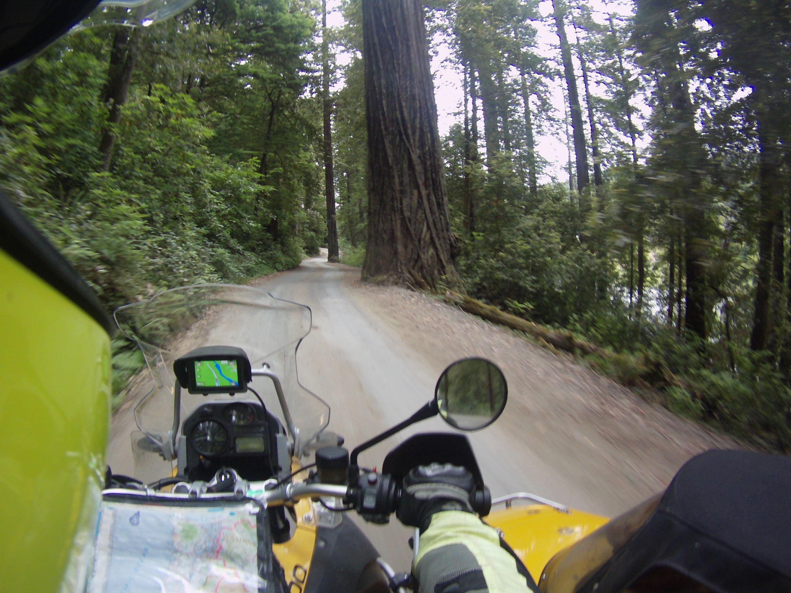 16JUL_Redwoods1