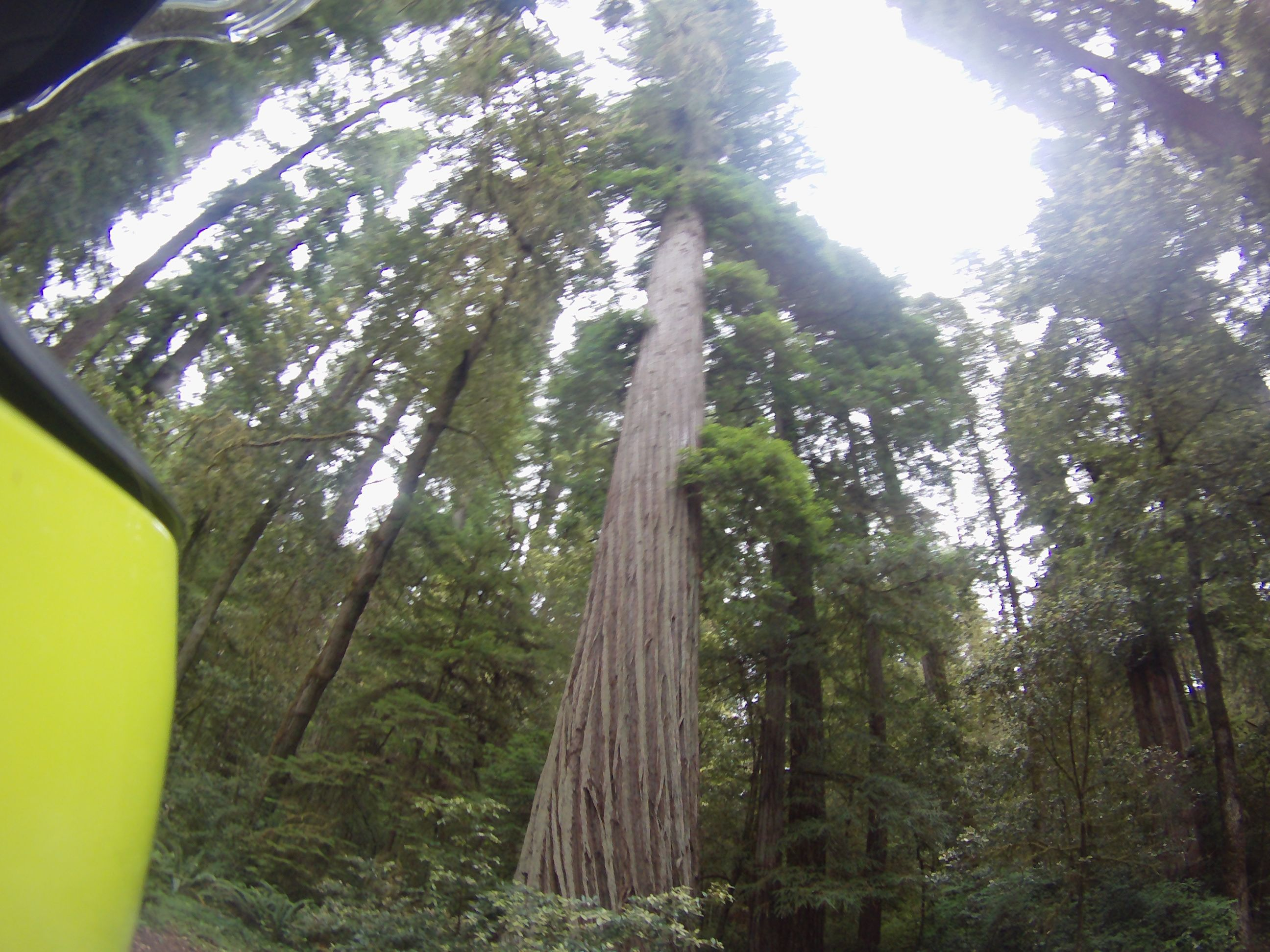 16JUL_Redwoods4