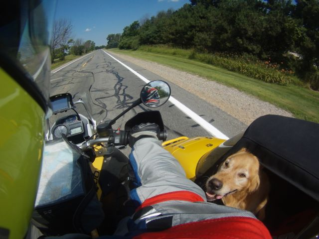 Barley watches me often while we ride