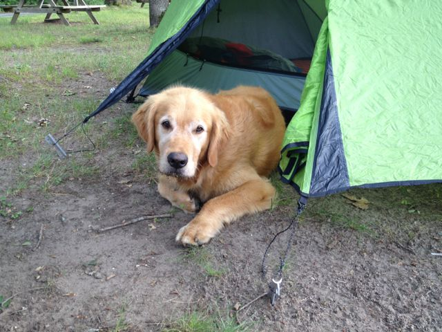 Is it chow time yet? Camping at Kesselwood