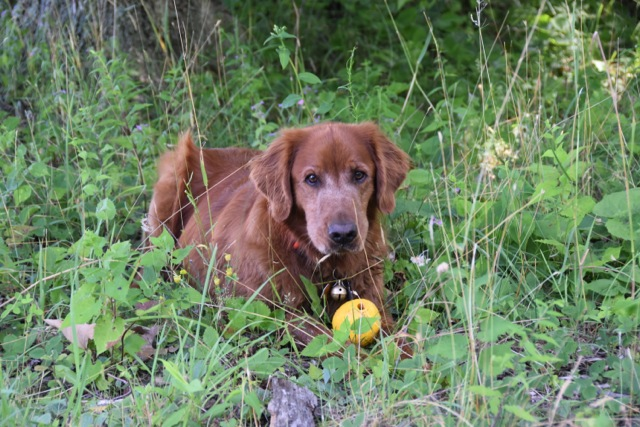At every break, Tully would take his ball into the brush and watch me